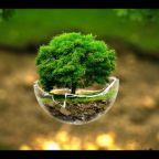 10 Websites on Environmental and Animal Welfare News